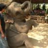 ปางช้างไทรโยค